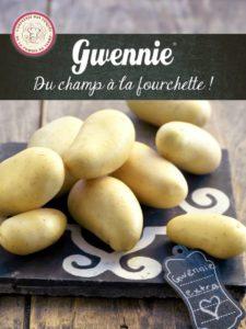 Dossier pomme de terre Gwennie